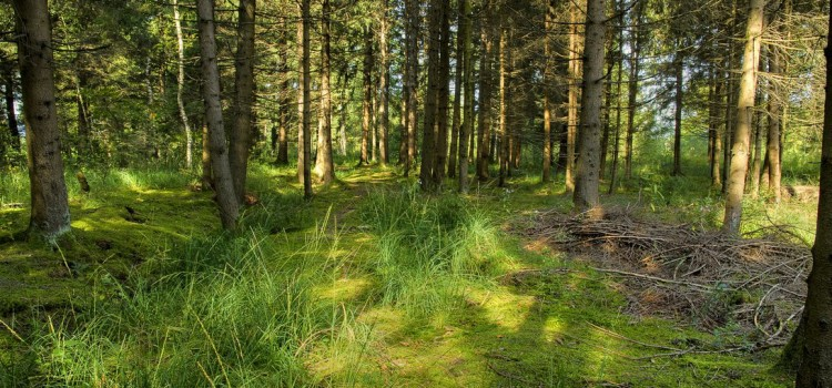 Stopping By Woods On A Sunny Afternoon (With Apologies to Robert Frost)